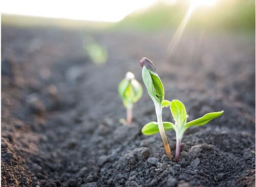 《浙江省土壤污染防治2018年工作计划》发布